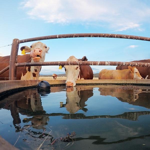 farm bore water